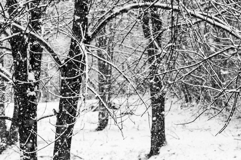 SnowDay-055