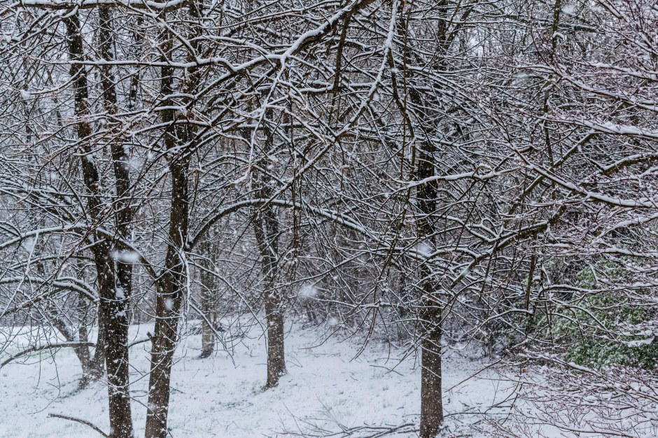 SnowDay-058