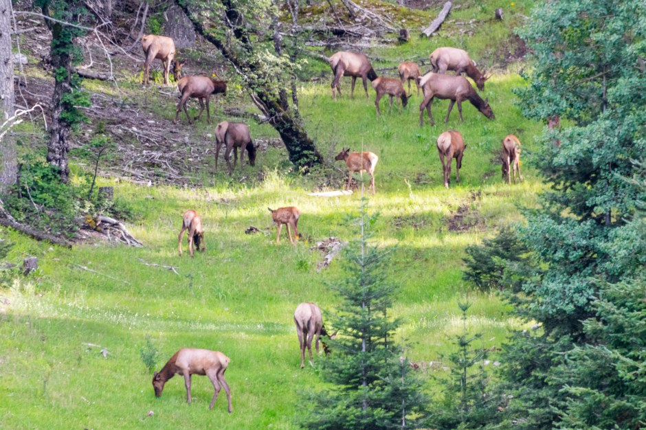 NM Elk20170812-3